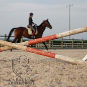 horse-3362109xx.jpg