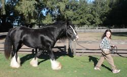 caballos curso doma