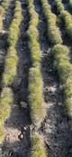 Підведення підсумків осінньої інвентаризації лісокультурних об'єктів