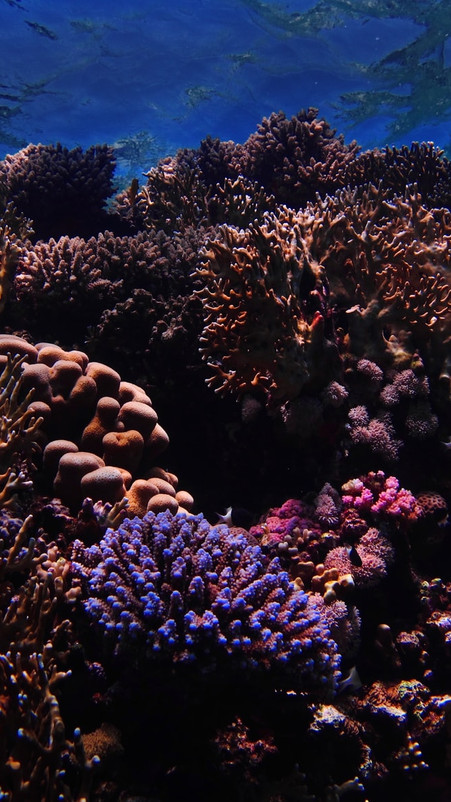 La conservación y restauración de los arrecifes de coral