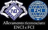 logo enci_edited.jpg