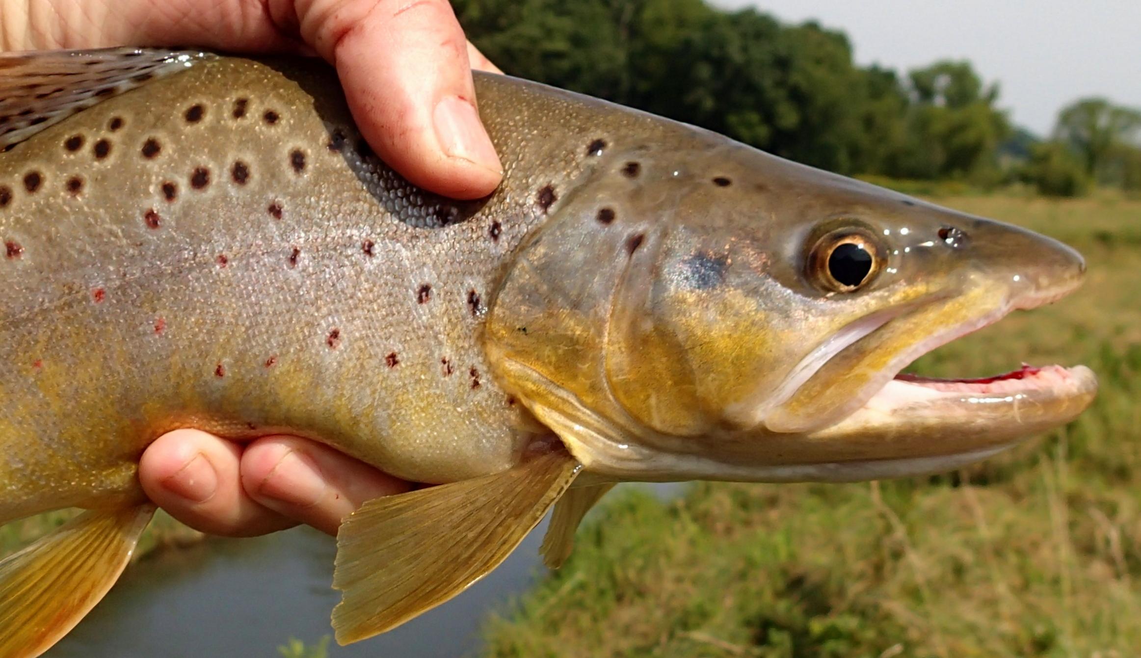 brown56e (1)