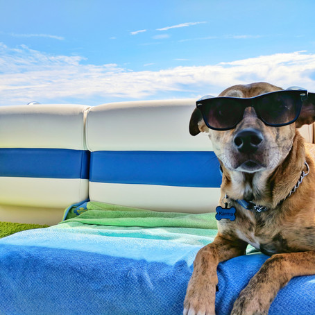 Easy Ways to Help Your Pet Beat the Heat