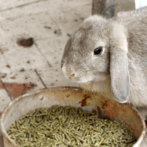 Catherine Corden-Parry warns about 21 foods not to feed your rabbit