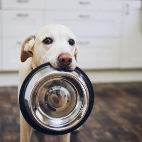 Catherine Corden-Parry has this advice on how to feed your dog