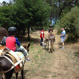 Donkey ride and farm experience, Sintra with kids, passeio de burro, learning activity