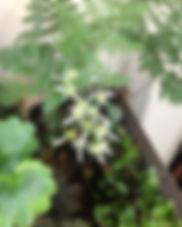 盆栽教室.jpg
