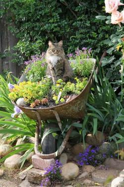 anduze notre chat