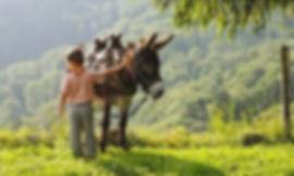 Balades à dos d'âne.jpg