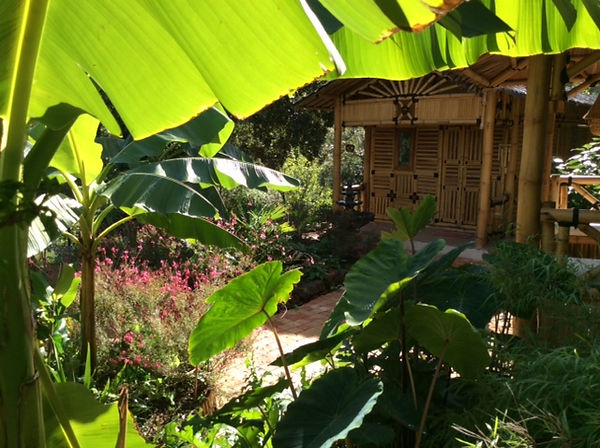 ambiance bananiers , palmiers.JPG