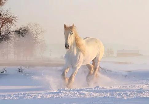 stage de cheval Vabres.webp