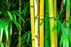 bambouseraie-anduze 4