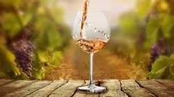 nos caves vinicoles 1