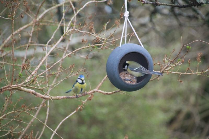 anduze oiseau 4