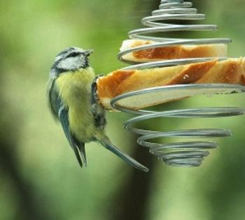 anduze oiseau 9.jpg