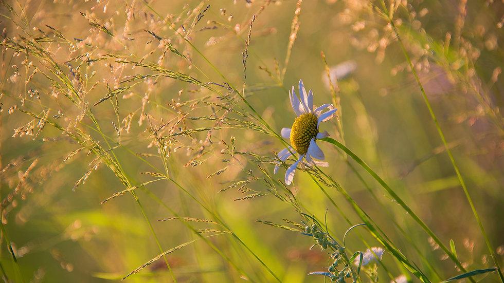 Мир растений 029