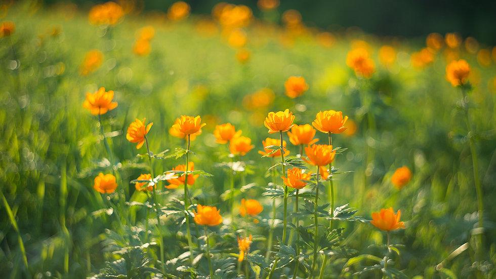 Мир растений 010