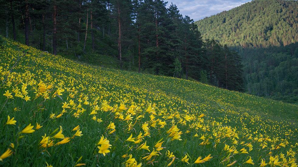 Мир растений 028