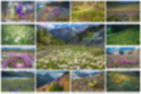Collage-Цветы.jpg