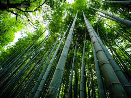How to take the pressure off: Chinese bamboo