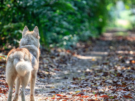 Research Project: Are you a Lone Wolf?