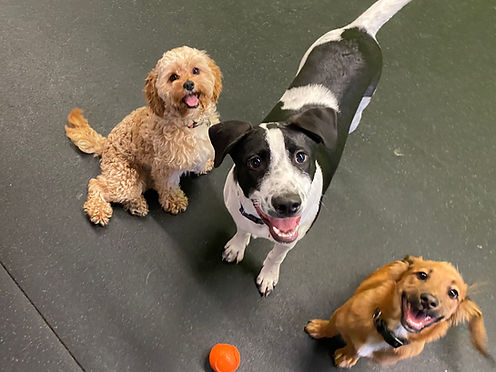 Puppy Trio.jpg