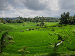 Five Must-see Destinations in Ubud, Bali