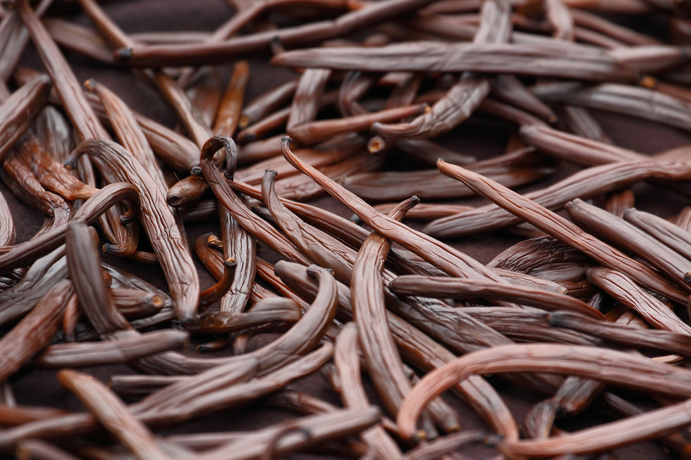 Vanilla dry fruit in the curing ferments