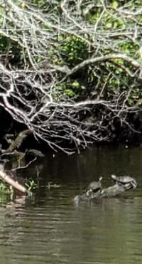 FT Turtles.jpg