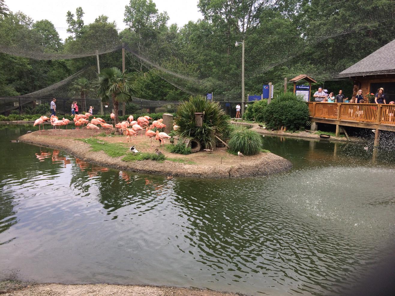 Sylvan Heights Bird Park