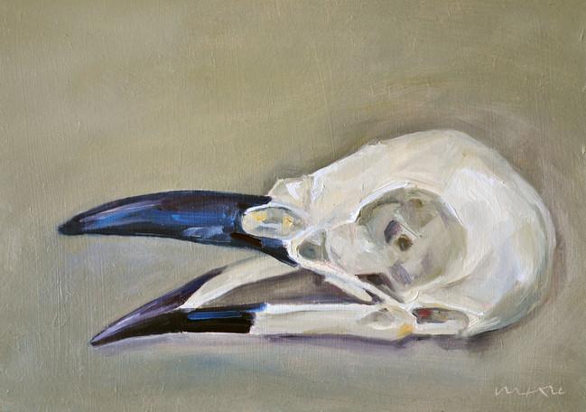 Jackdaw Skull (Corvus Monedula)