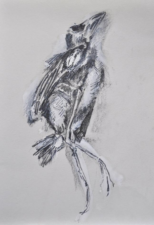 Dead Sparrow Chick