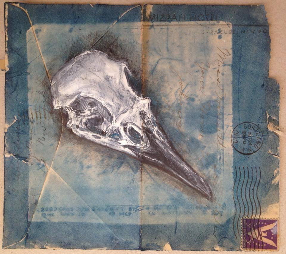Carrion Crow Skull
