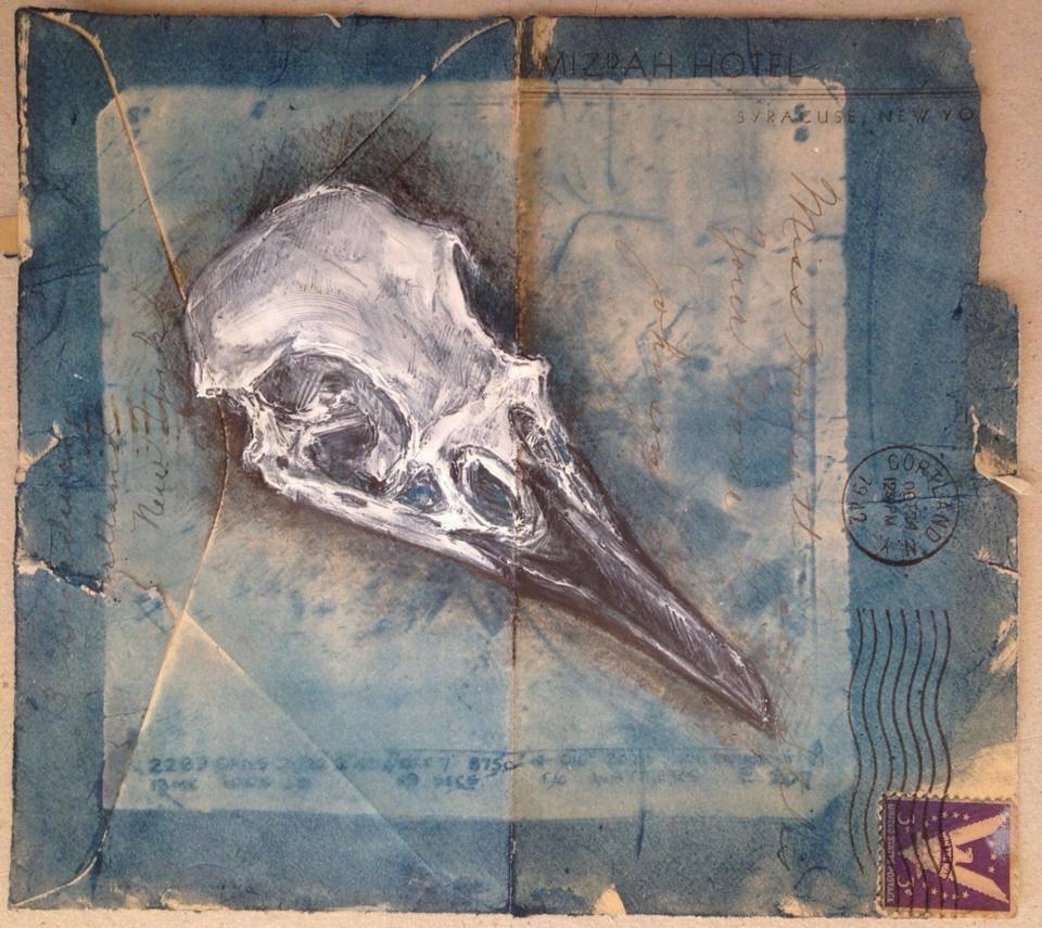 Carrion Crow Skull