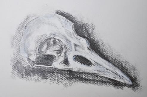 Rook Skull