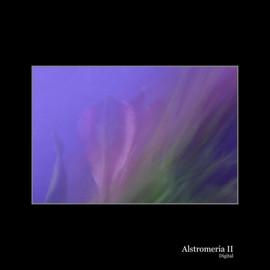 Alstromeria II