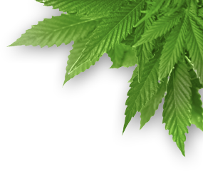 pot-leaf-transparent-png-17.png