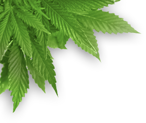 pot-leaf-transparent-png-17_edited.png