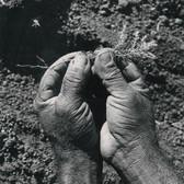 Leo Matiz (1917-1998)  Reforestation photo circa 1945 [printed later] selenium toned gelatin silver print, stamped 16 x 12 inches