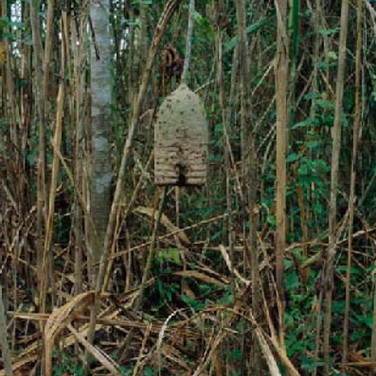 Sam Abell  Wasps' Nest, 2003 - 2007  archival pigment print, edition of 10  36 x 24 inches