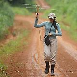 Tracking-Harpy-Eagle_Xingu-Region_2015_p