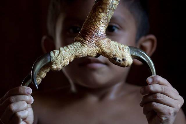 Durante ação ambiental, uma criança de um assentamento amazônico, segura a garra de uma Harpia.