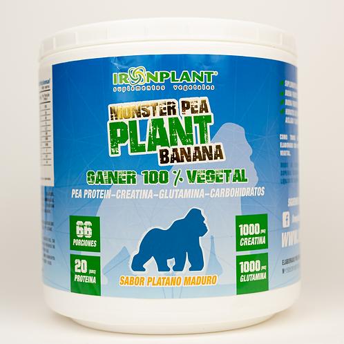Monster Pea Plant Banana 4 kg