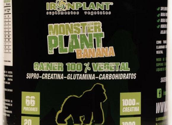 Monster Plant Banana 4 kg