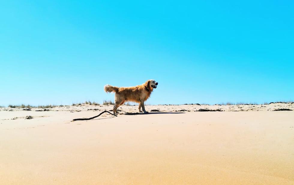 George on the beach