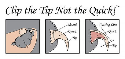 clip-the-tip-not-the-quick-625x298.jpg