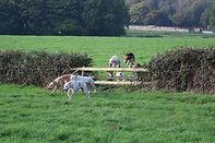 heckfield hounds.jpg
