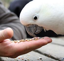 troubles alimetairesde l'animal soignés par biorésonance