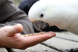 Confira produtos para seu pássaro