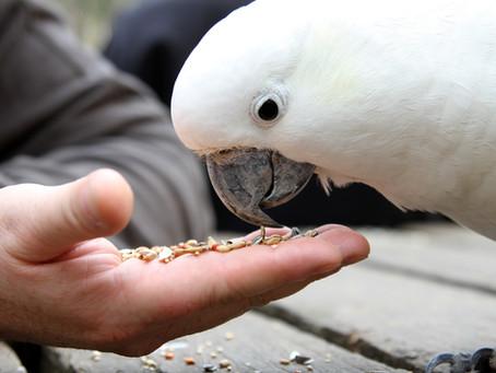Bird Care Tips!